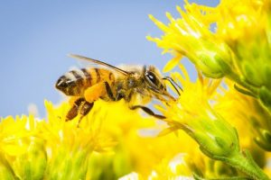 How to assist the bee population